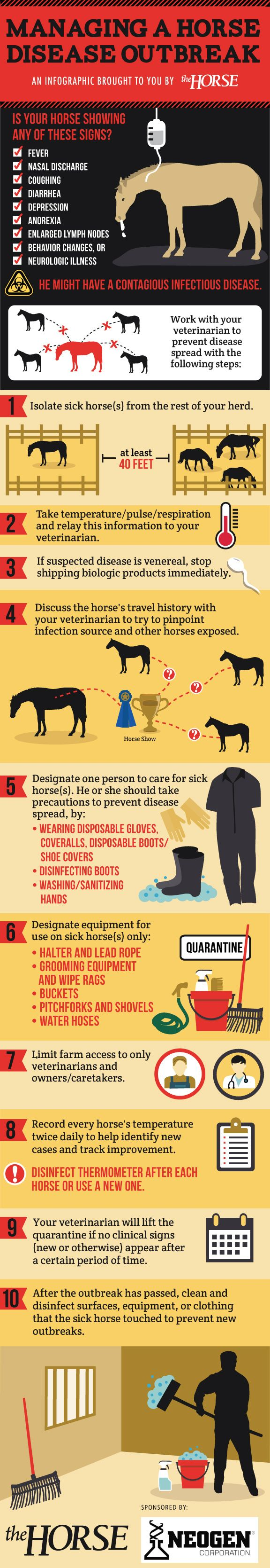 Crucial information to know and share if you ever have a disease outbreak in your barn--really, it could save lives! [INFOGRAPHIC] Managing a Horse Disease Outbreak - TheHorse.com | Is your horse showing clinical signs of an infectious disease? Here's how to care for your horse and protect others during an outbreak in our step-by-step visual guide, brought to you by TheHorse.com and Neogen. #infectiousdisease #biosecurity #horses #horsehealth #outbreak #infographic