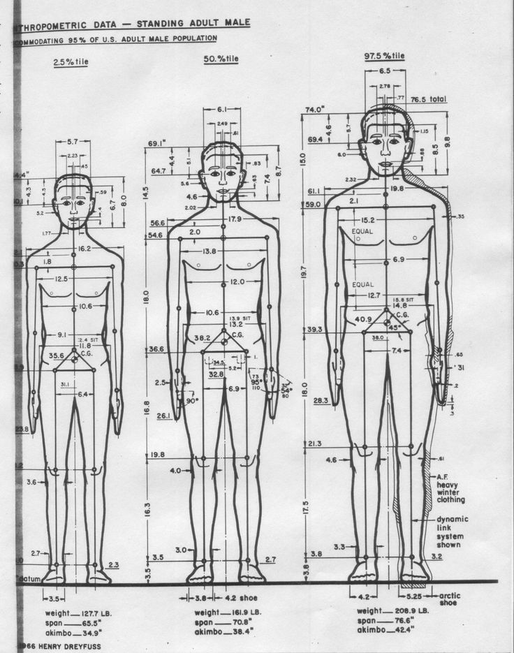 12 Best Images About Anthropometry On Pinterest Body