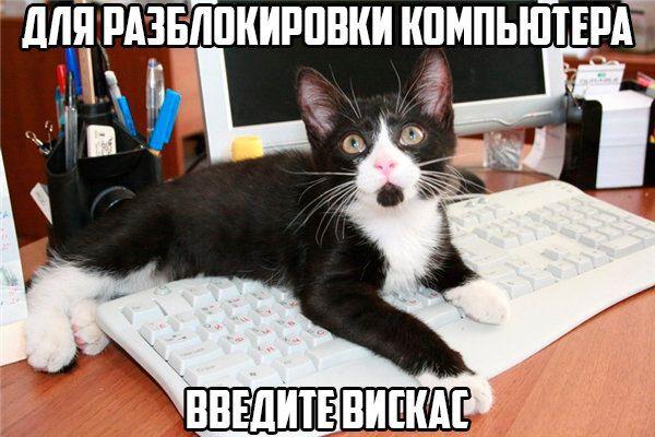 Тимоѳей Котъ