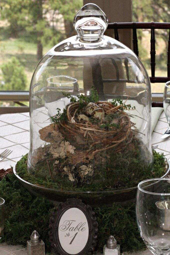 Bird's nest centerpiece covered in glass - dust proof!