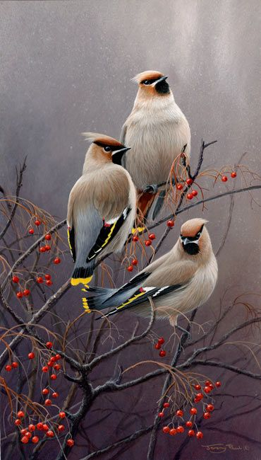 <3 <3 Waxwings, by, UK Wildlife Artist Jeremy Paul..Brilliant! <3 <3