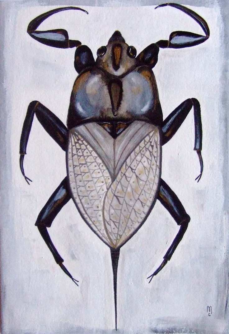 Bug Insect Animal Nature Original Drawing Acrylic Painting Watercolor Ink  Art Grey Black Gold White Contemporary. 34 best insect art images on Pinterest   Insect art  Watercolors