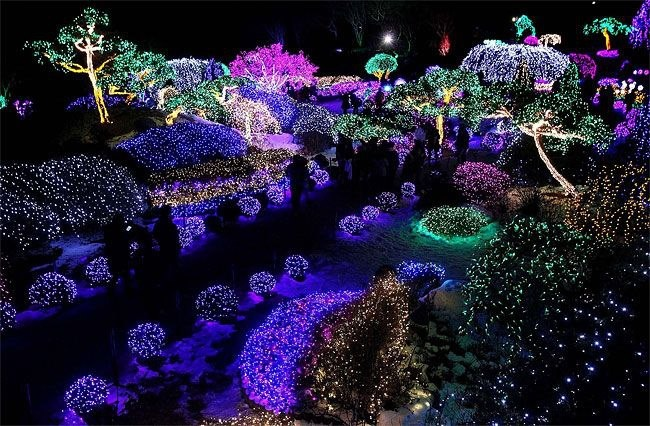 Christmas lights at the Garden of Morning Calm in Gapyeong, South Korea