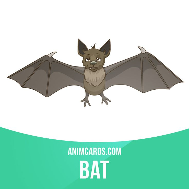 The wings of bats are much thinner and consist of more bones than the wings of birds, allowing bats to maneuver more accurately than the latter, and fly with more lift and less drag. #english #englishlanguage #learnenglish #studyenglish #language #vocabulary #dictionary #englishlearning #vocab #animals #mammals #bat #bats