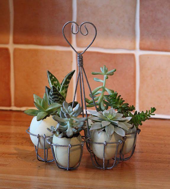 Love this... tiny eggshell garden
