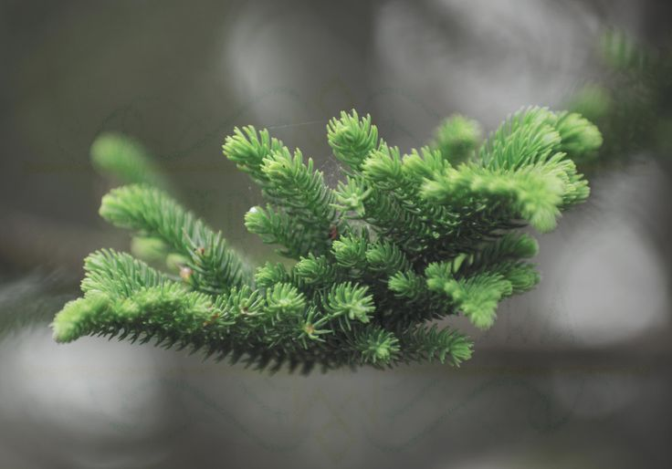 Pine Needles Photo Print Card by TreasuresofTerranora on Etsy