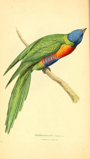 .beautiful colorful bird print