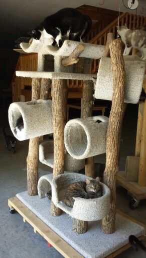 Homemade cat tree adoption facility pinterest for Cat climber plans