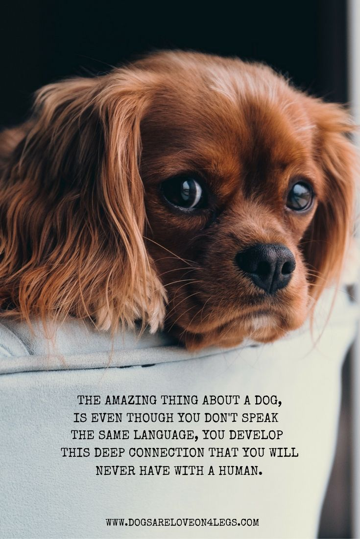 The Amazing Thing About A Dog Dog Quote Dog Training Dog
