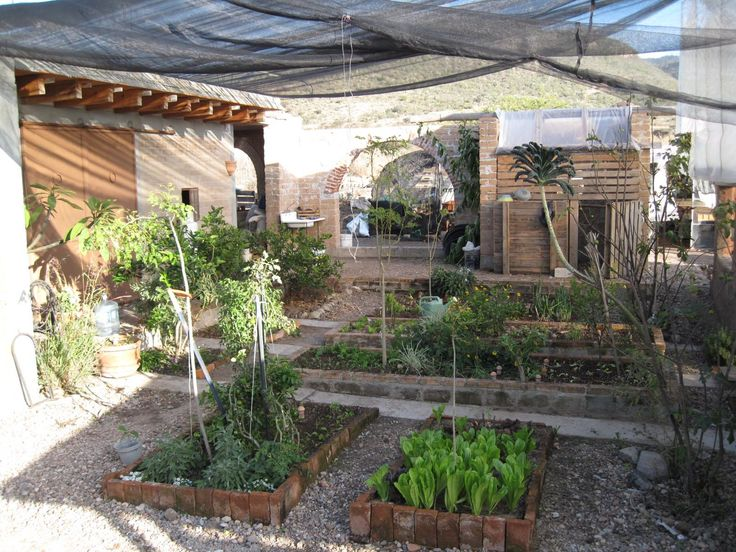 8 best Mexican garden! images on Pinterest | Mexican garden, Back ...