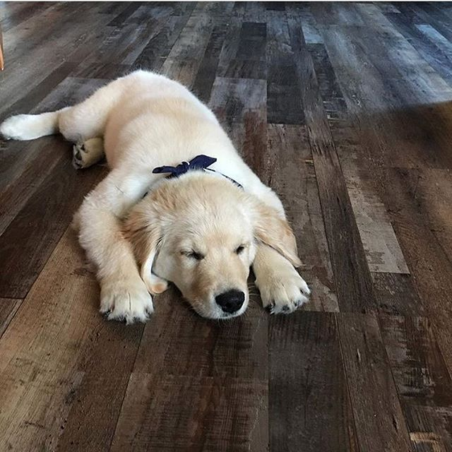 Redefined Pine Rustic Vinyl Flooring Dog Heaven Cute Dogs Baby Animals