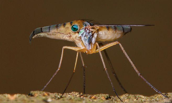 Strange insect