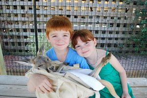 10 Fun Things to Do in Gulf Shores and Orange Beach with Kids: Pet a Kangaroo or a Snake