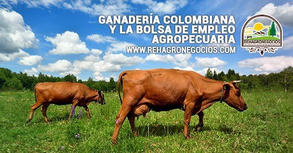 Ganaderia colombiana y Bolsa de empleo    Tabla de contenidos  1 Bolsa de empleo agropecuaria y Ganadería colombiana  1.1 En la ganadería colombiana la macroeconomía es un factor   1.1.1 El incremento del empleo informal y sus orígenes.  1.1.2 Más de mi sitio