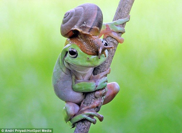 Best Cool Photos Images On Pinterest Moose Active Volcano - Frog wearing two snails as hat becomes star of hilarious photoshop battle