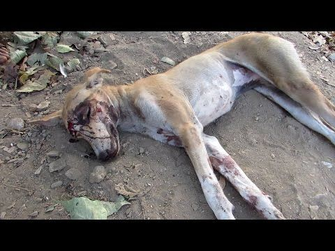 We thought she was dead…amazing recovery of street dog - YouTube