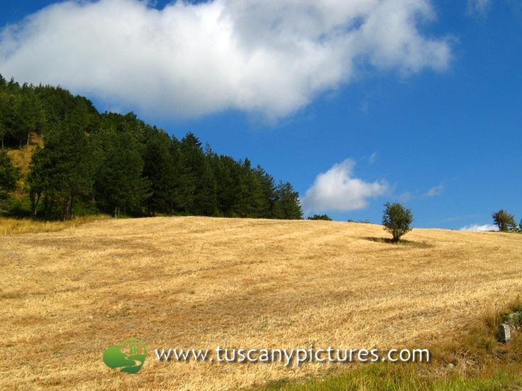 View of Mugello Area