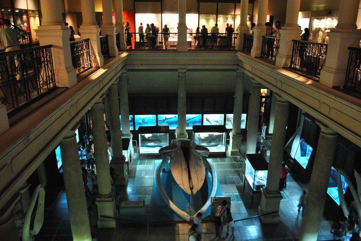 Museo de Ciencias Naturales de La Plata. Pcia. de Bs. As. Argentina.