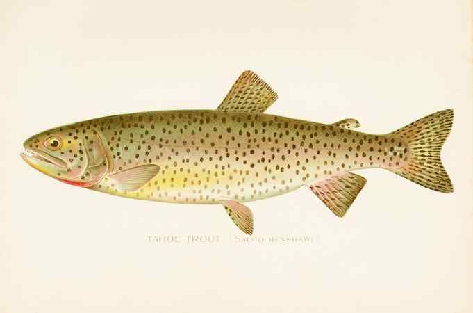 229 best zoology fish and marine animals images on for New york state fish