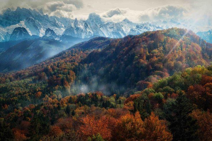 Лучи солнца проникают сквозь гущу деревьев, Альпы, Швейцария