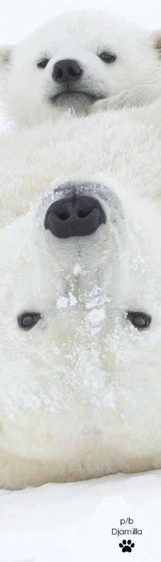 Playing Polar Bears