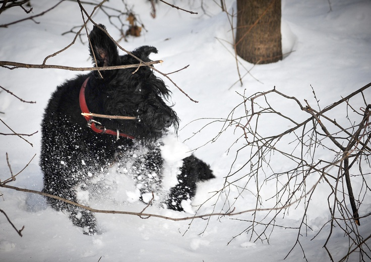 Throw me a stick, look, i took one by myself!