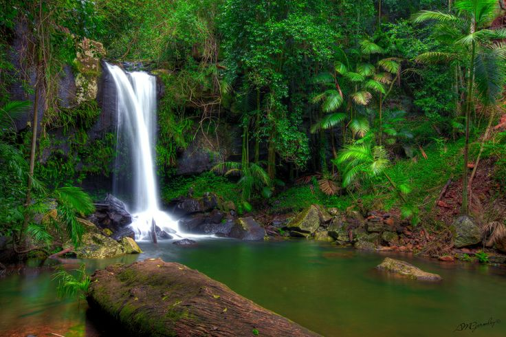 Curtis Falls - Tamborine Mountain