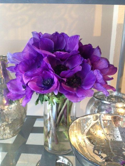 Purple anemones...