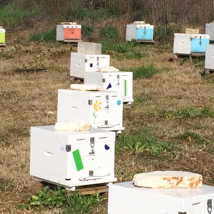 Bee Hives flowered decorated