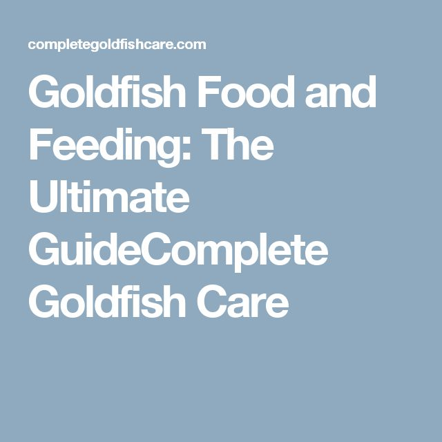 Goldfish Food and Feeding: The Ultimate GuideComplete Goldfish Care