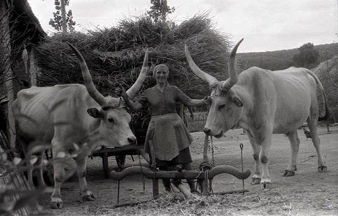 Bükkaranyos 1967
