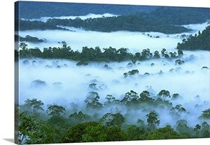 Canopy of lowland rainforest, Danum Valley Conservation Area, Borneo, Malaysia