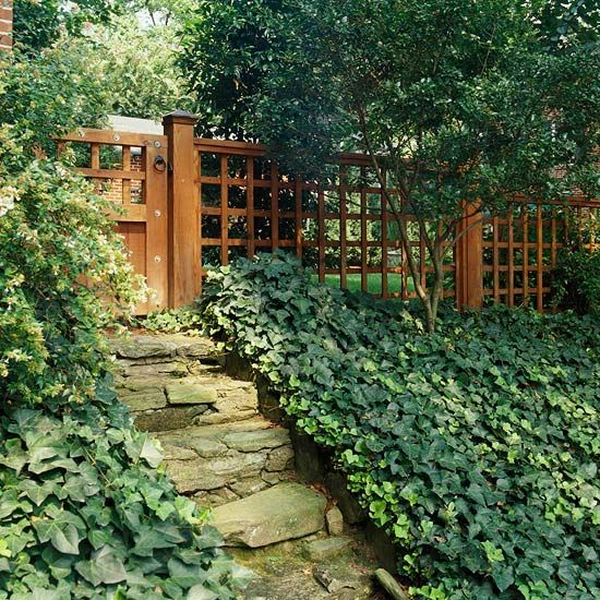 English Ivy-Ivy has been used for ages as a shade-loving groundcover or vine; it creates a dense mat on the ground until it finds something to climb on, then sends aerial roots into its support to grow up. Because it has these aerial roots, it's not the best choice for growing up brick walls.