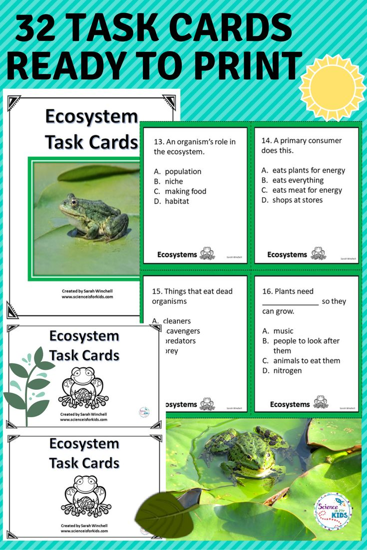 Are you getting ready to teach about the ecosystem? These task cards can help with assessment and get students engaged in a science activity. There are 32 task cards included with an answer key. Your students can also play a Scoot Game with these games. Everything you need is included in this ecosystem activity.