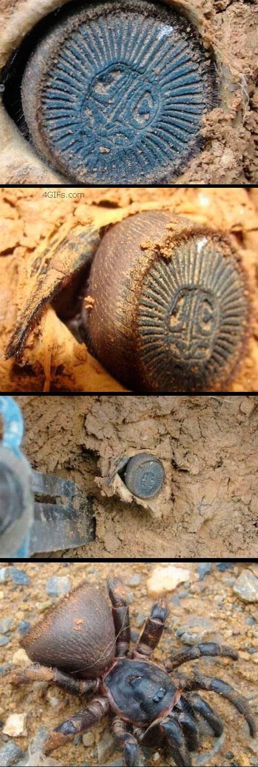 A trap door spider. Still want to be Indiana Jones & dig things up!?