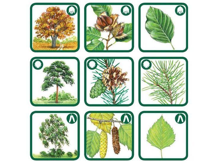 stromy - Hledat Googlem