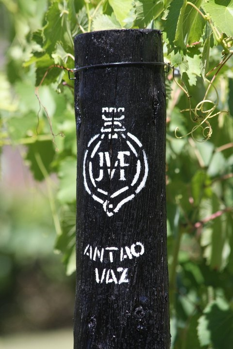 Antão Vaz is a grape wine with an excellent quality.