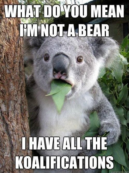 What's this koala thinking? travelphotography travel animal Memes, Phascolarcto Cinereus, Native Bears,