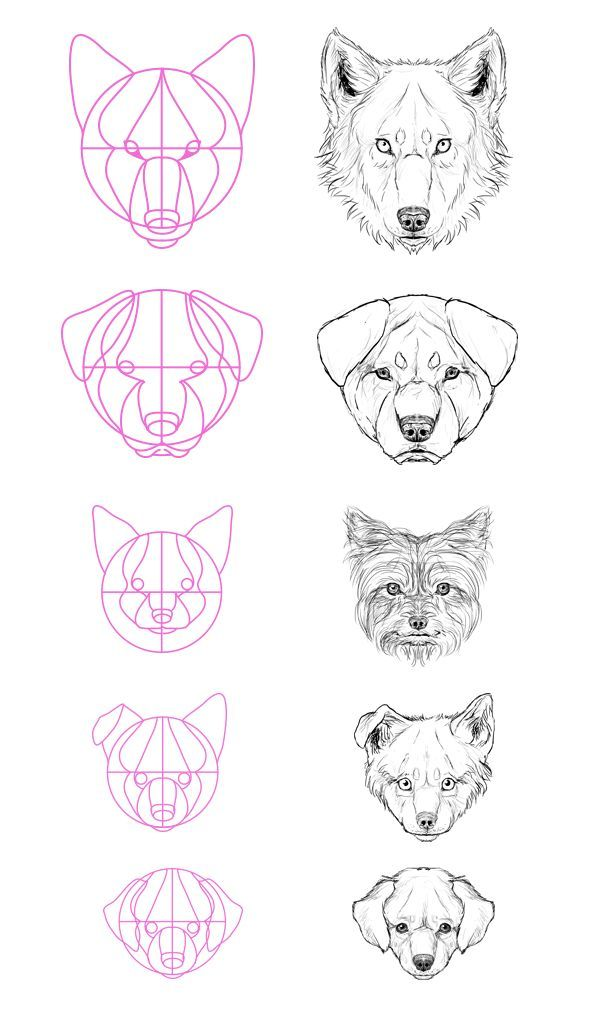 Wolf Head Drawing Step By Step Easy
