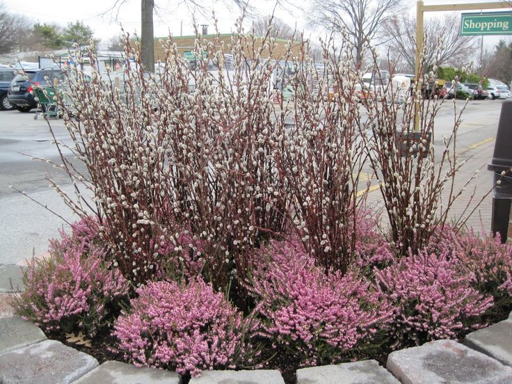 23 best images about pussy willow arrangements on