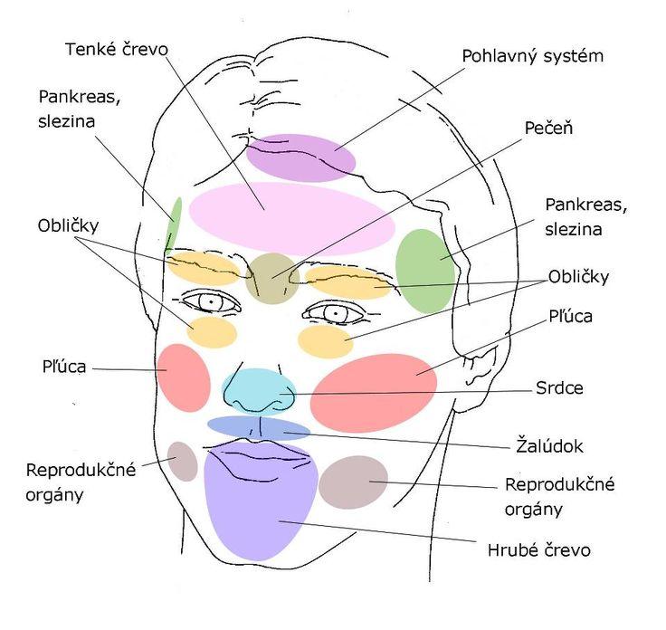 Kľúčové zóny tváre a ich pridružené orgány: • Čelo: tenké črevo, pankreas, pohlavný systém – Začevenanie alebo suchá, šupinatá pokožka – je prejavom nedostatku tekutín v zažívacom trakt…