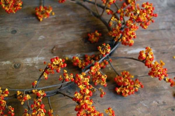 Bittersweet vine produces bright berries in the fall so it makes for a festive way to decorate for a fall wedding.