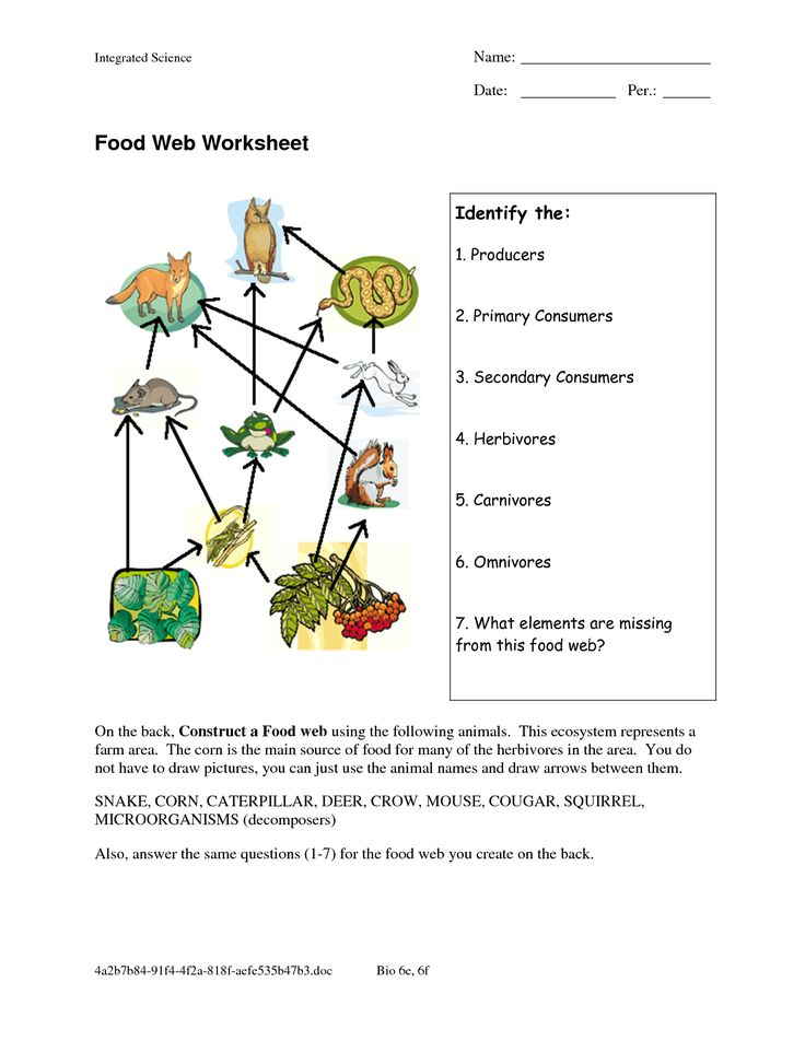 food web worksheets food web worksheet doc interesting pinterest food webs worksheets and activities