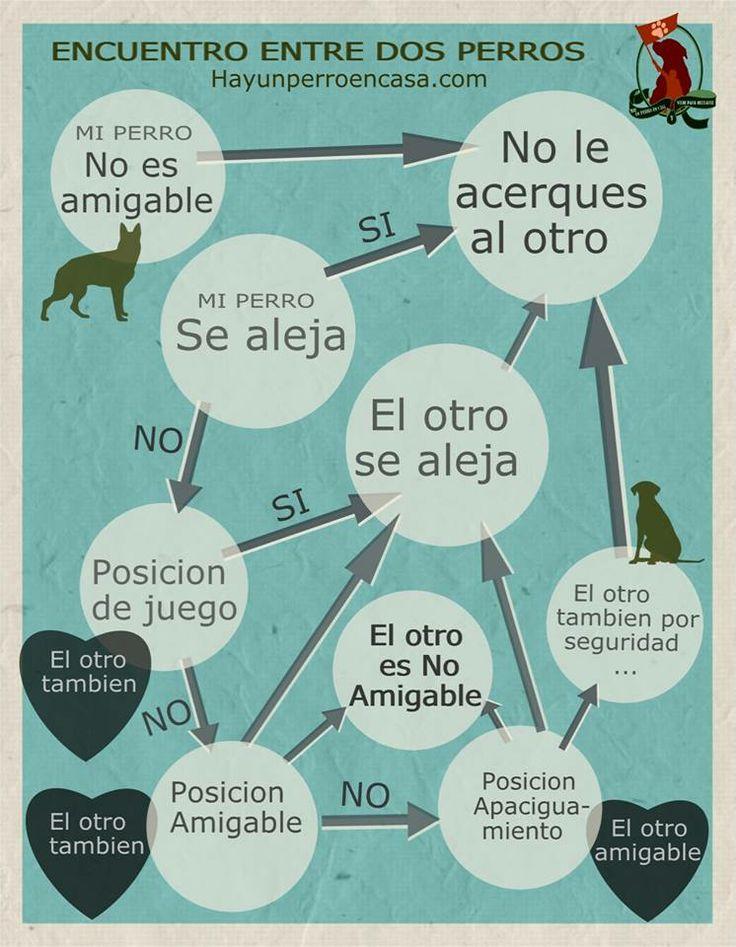 Infografía Comportamiento de los perros en la calle