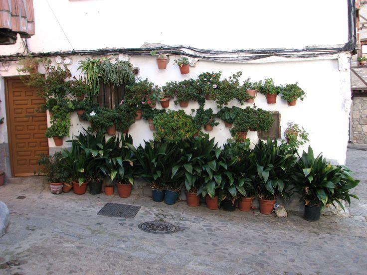 Una de tantas casas adornadas con plantas en el casco histórico de Hervás. Muchas gracias hervasenses.