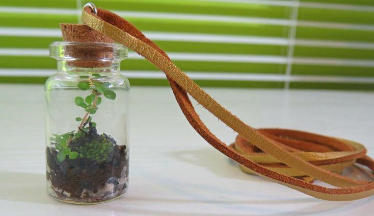 Terrario / Terrarium miniatura . Tutorial Paso a paso para crear tu terrario o jardín embotellado.