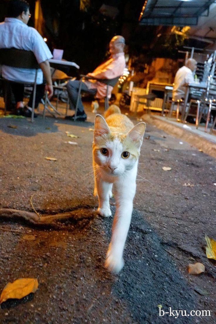 B-Kyu: B-Kyu in Kuala Lumpur ~ Peters Pork Noodles, Fatt Kee Hokkein Mee, Imbi Markets and Hussain Bistro Curry House.