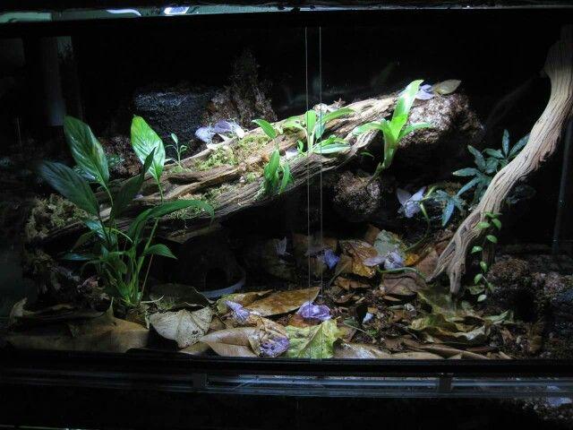 1000 images about akvaario ja paludaario on pinterest for Aquarium pond fish pdf