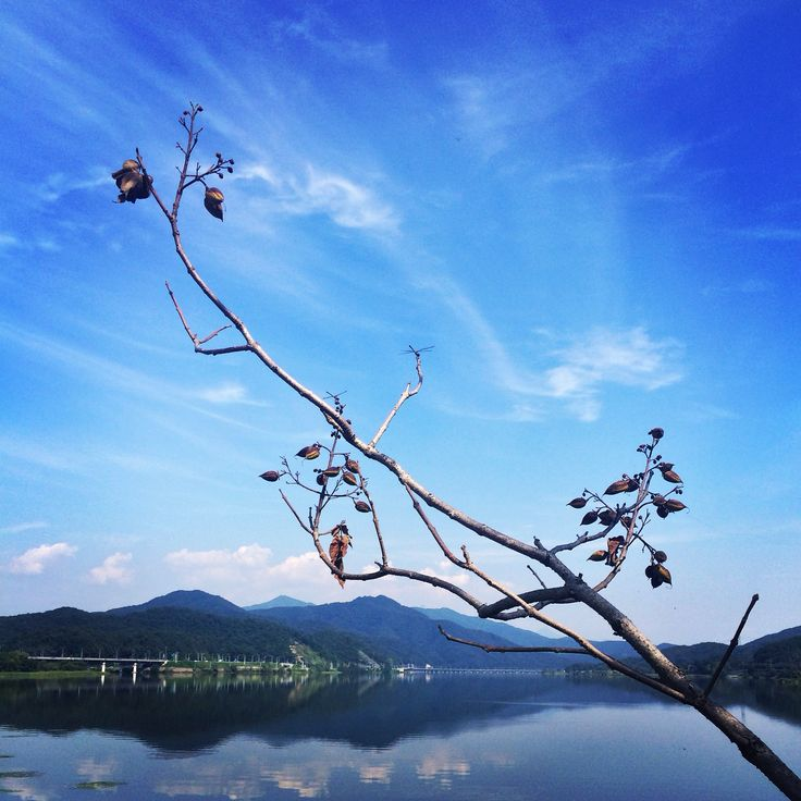 양평 두물머리 2014.9.7
