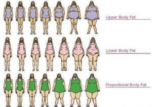 three types of weight gain.. upper area for top heavy types.. lower area for bottom heavy types.. and the proportional for the curvy, hourglass types missing the mid-section type..??? where are they?